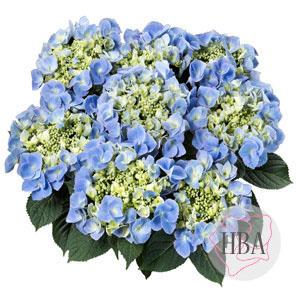 Frisbee® blue