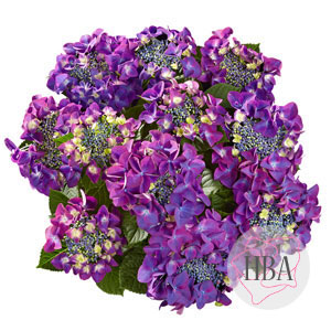 Frisbee® purple