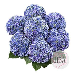 horTivoli blue