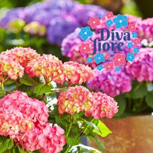 Diva-Fiore®-HBA