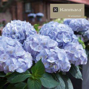 Kanmara®-de-Schoonheid