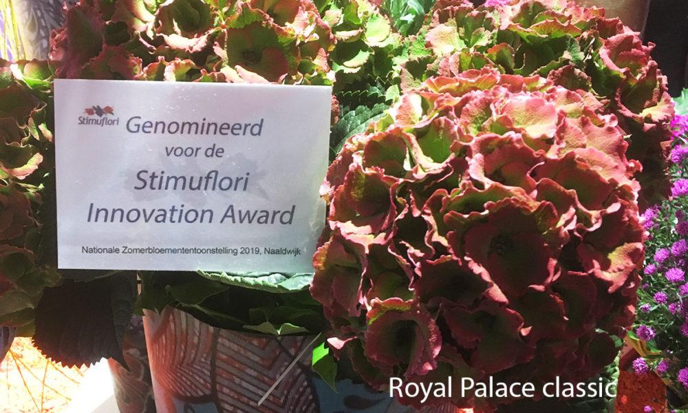 Royal Palace nominatie Stimuflori Innovation Award